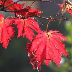 Autumn Scents