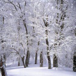 Winter Scents